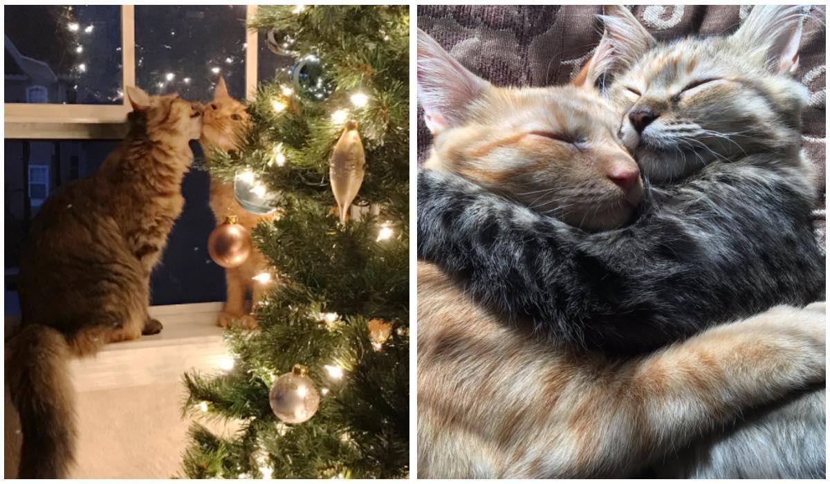 ¡Esta adorable pareja de gatitos está derritiendo a todo el mundo!