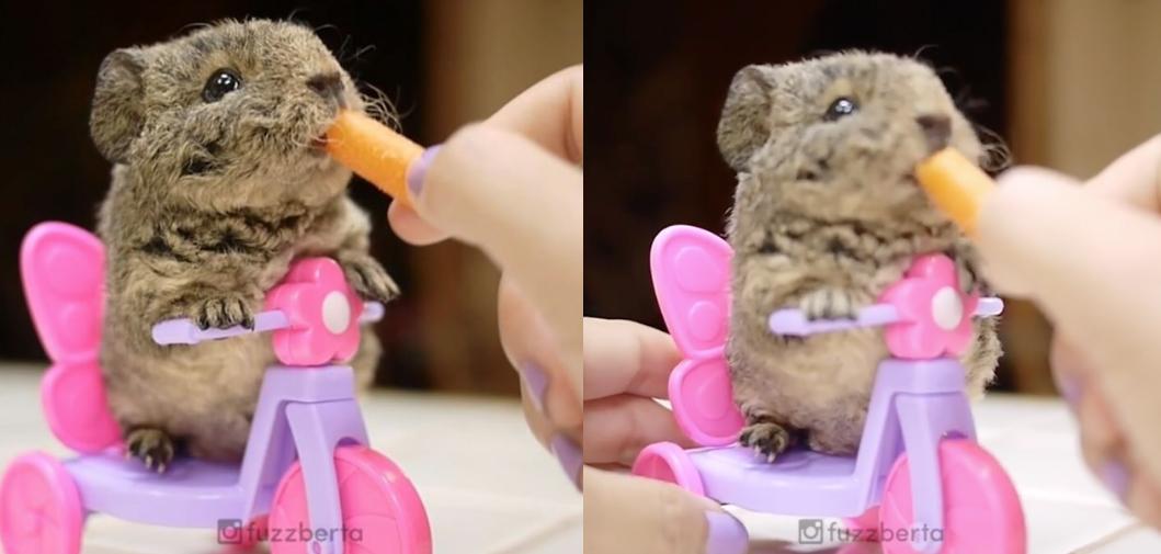 El vídeo del conejito que come zanahoria montado en una moto