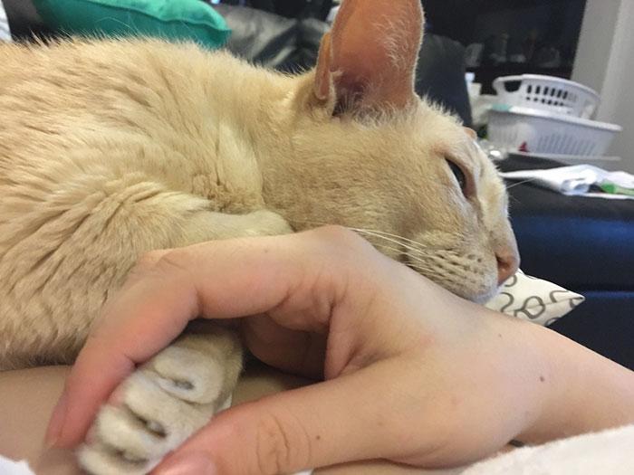 Este gato solo se duerme si le coges la patita