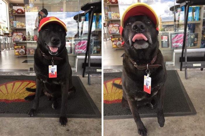 perro abandonado en gasolinera ahora trabaja ahi