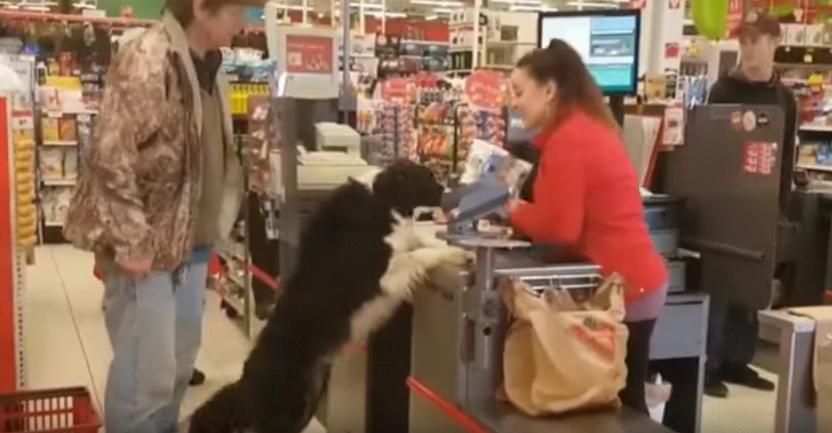 No podrás dejar de reír con el vídeo de este perro comprando su propia comida