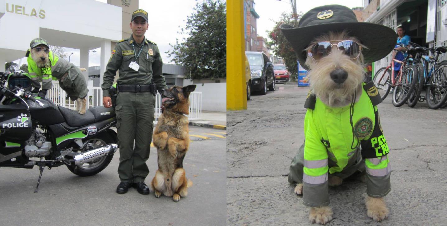La policía adoptó a este perro y descubrió que era perfecto para el trabajo