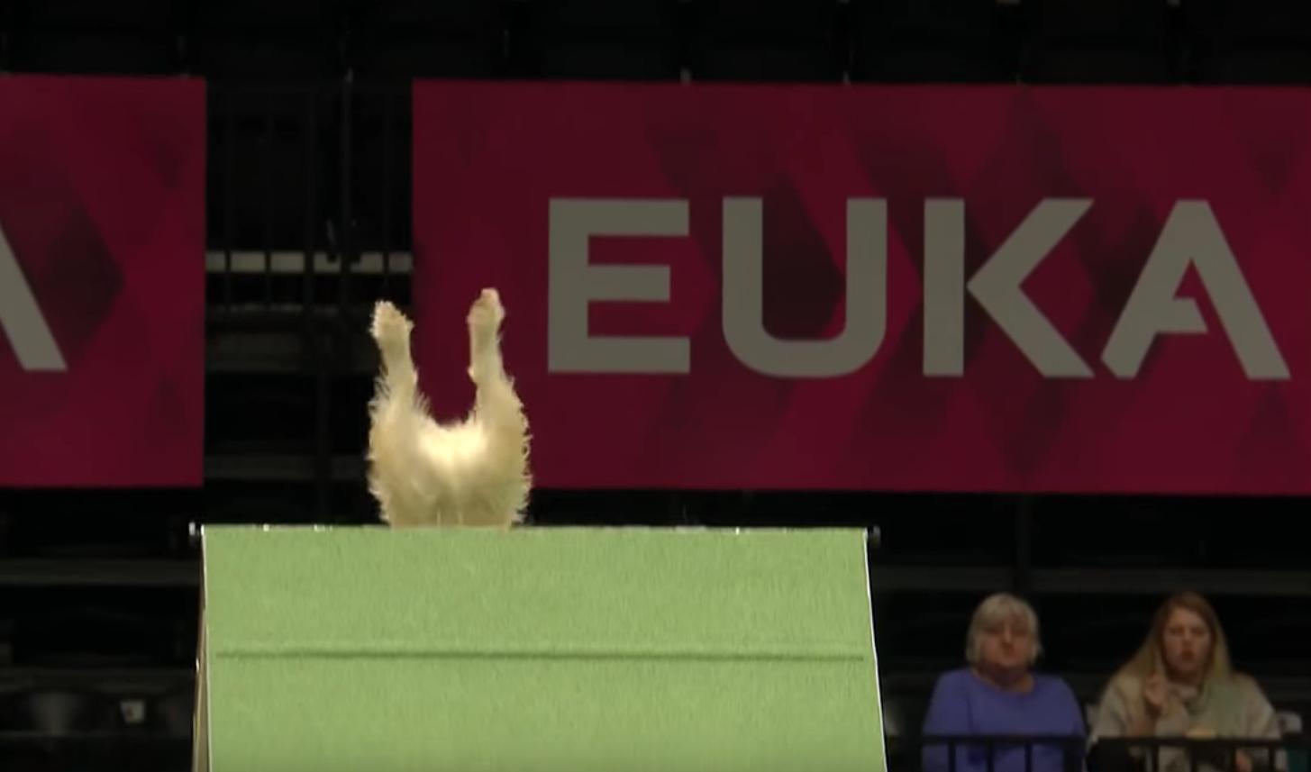La desastrosa (y divertida) carrera de este perrito se hace viral