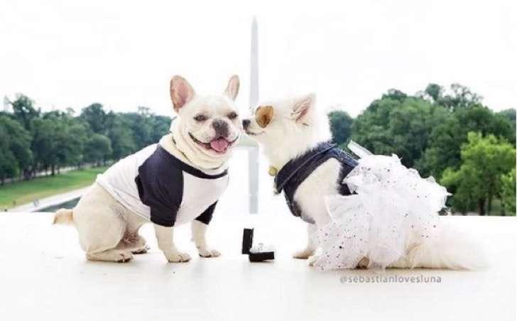 La pareja de perritos que te devolverá la fe en el amor