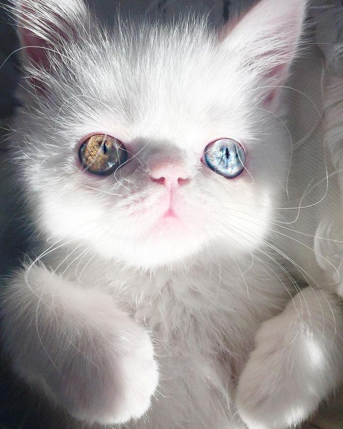 Esta gatita tienes los ojos más bonitos que hayas visto nunca