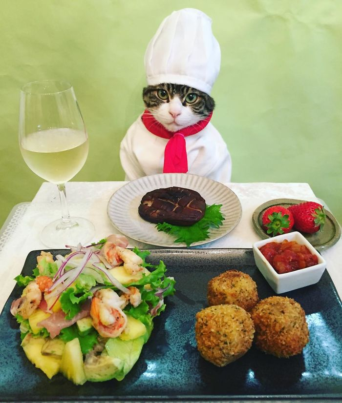 Convierte a su gato en chef y las fotos son las más divertidas