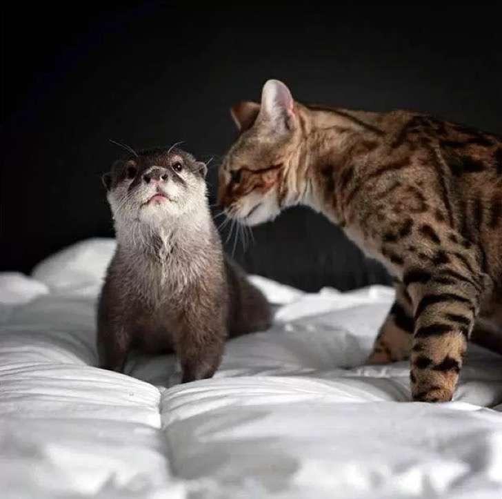 La amistad entre este gato y esta nutria ha enamorado a las redes