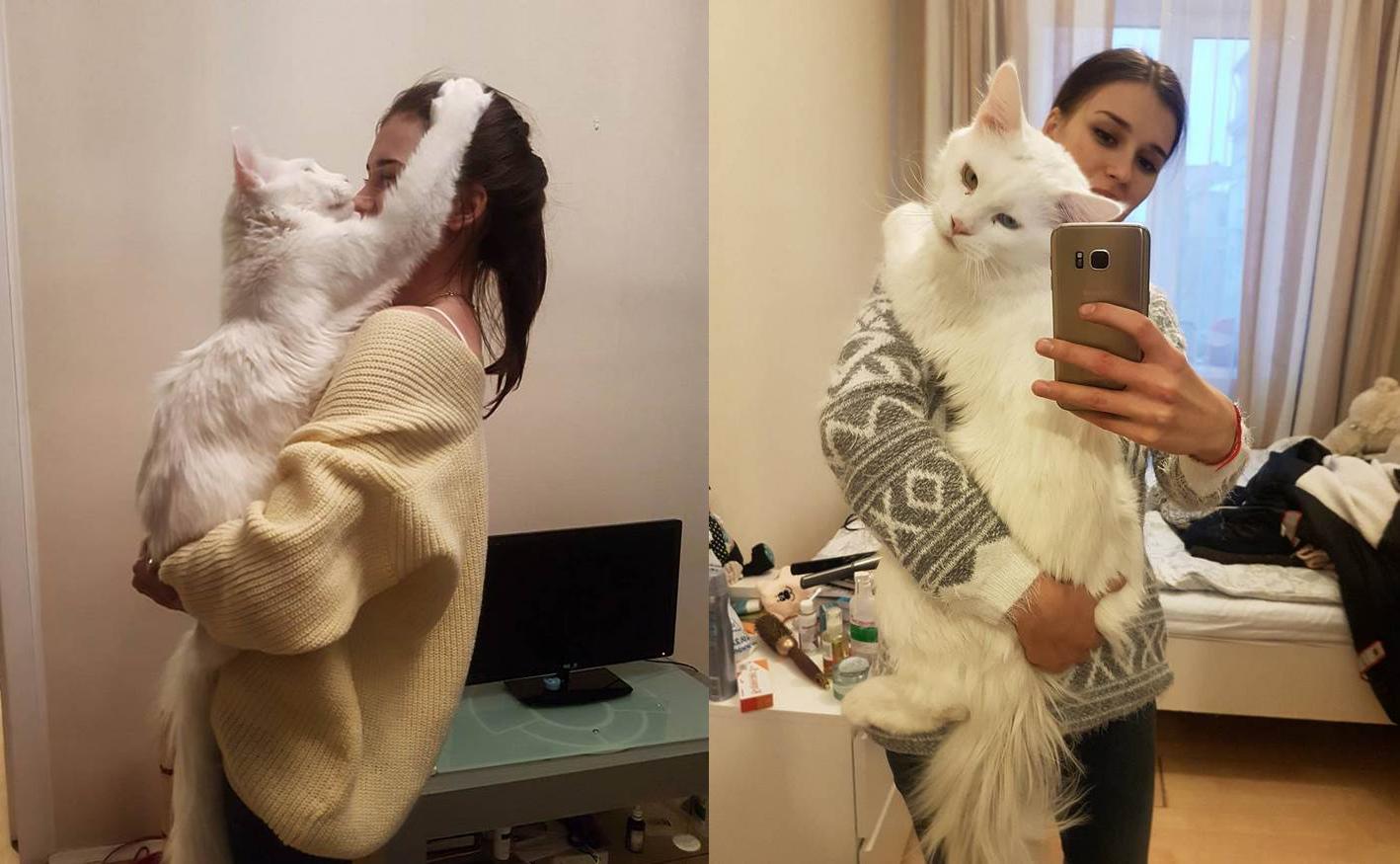 Este gato gigante solo quiere pasarse el día en los brazos de su dueña