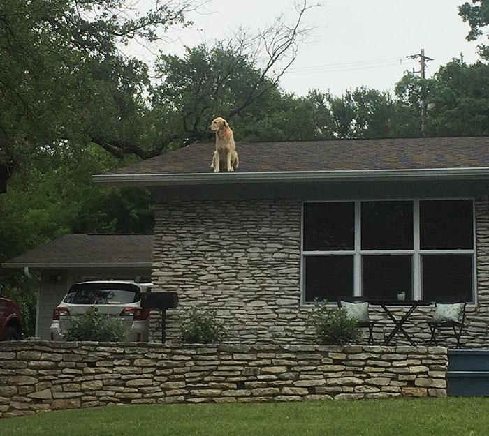 Esta familia puso un cartel explicando por qué su perro está en el tejado