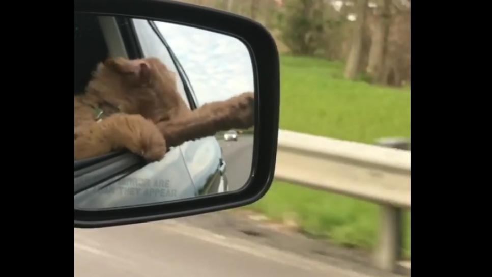 El divertido vídeo del perro que disfruta asomado a la ventanilla