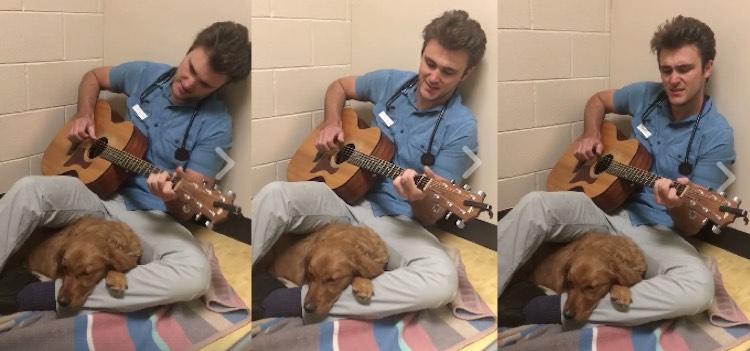 Este veterinario le cantó a uno de sus pacientes para tranquilizarlo