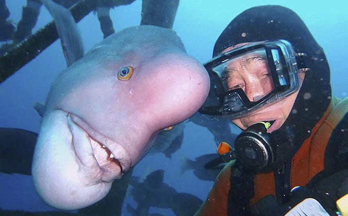 Este buceador y este pez llevan 25 años siendo amigos