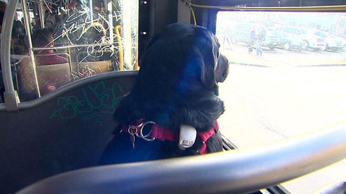 Este perro va solo al parque en autobús