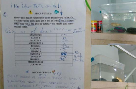Pide ayuda a sus vecinos para que cuiden en vacaciones de Pesesín, su pez
