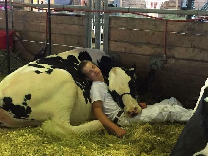La tierna historia detrás de esta foto viral de un adolescente y su vaca