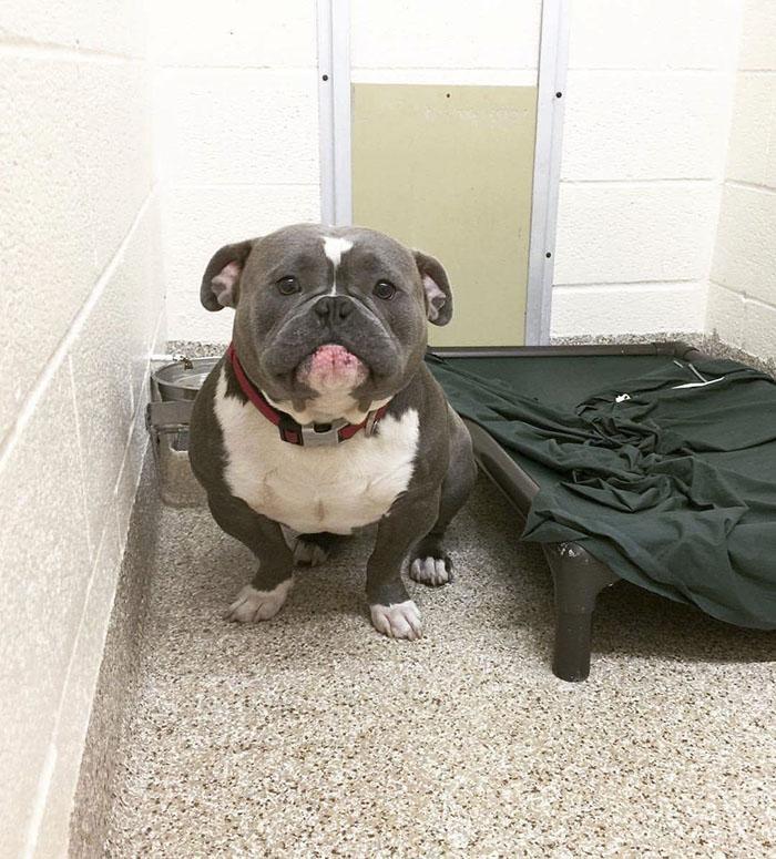 frank perro triste adoptado