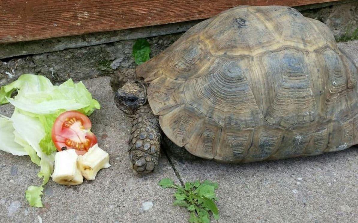 salva tortuga boca a boca