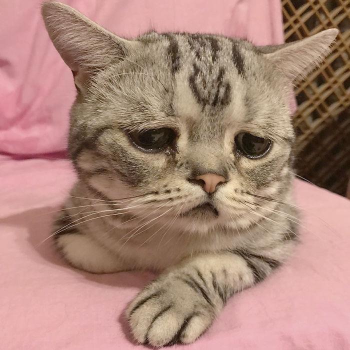 """Luhu es """"el gato más triste del mundo"""" y tiene enamorado a internet"""