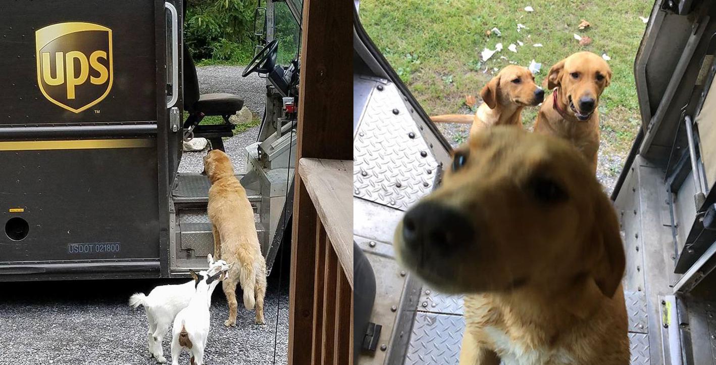 Los repartidores de UPS publican fotos de los perritos que se encuentran