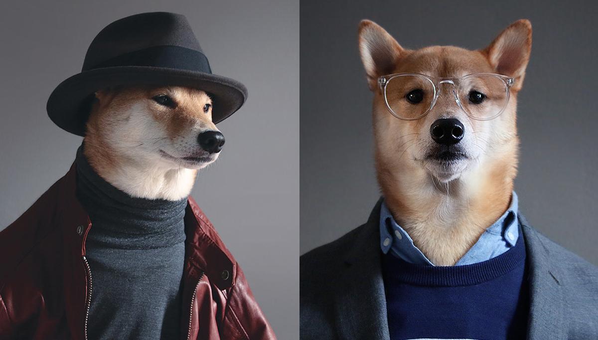 menswear dog perro modelo
