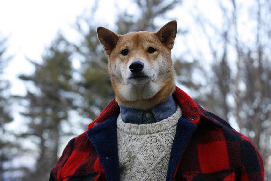 perro modelo