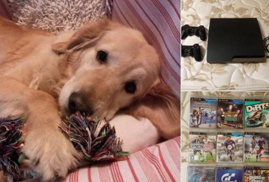vende play para operar a su perra