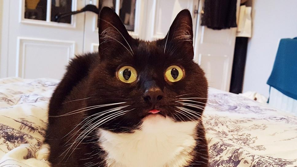 La cara de sorpresa de esta gata ha enamorado a las redes