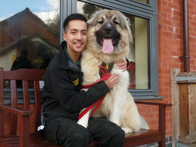 fluffy perra gigante