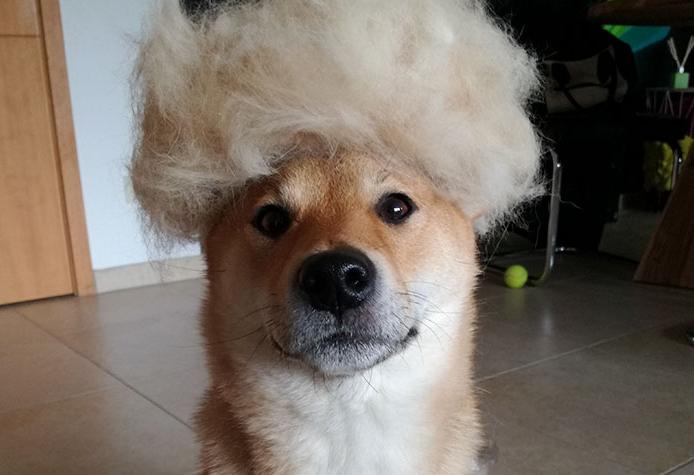 perra con peluca